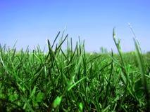 Fondo di erba e di cielo blu fertili due fotografia stock