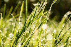 Fondo di erba verde fresca con le gocce di rugiada Fotografie Stock