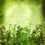 Fondo di erbe con gli effetti di lerciume Immagine Stock