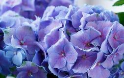 Fondo di erbe naturale. Fine blu del fiore su Fotografia Stock