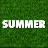 Fondo di estate con erba Immagine Stock