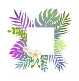 Fondo di estate con i fiori tropicali Immagini Stock Libere da Diritti