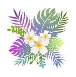Fondo di estate con le foglie ed i fiori tropicali Immagini Stock Libere da Diritti