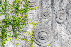 Fondo di estate Fogli di verde sulla corteccia di albero Immagini Stock