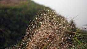 Fondo di fioritura dell'erba video d archivio
