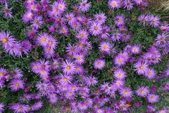 Fondo di fioritura di fioritura Violet And Green dei fiori immagini stock libere da diritti