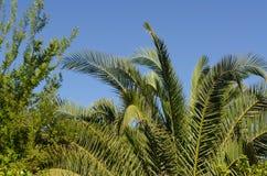 Fondo di foglia di palma Fotografia Stock Libera da Diritti