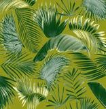 Fondo di foglia di palma dell'albero della miscela Immagine Stock
