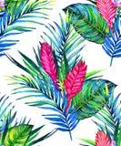 Fondo di foglia di palma di paradiso Immagine Stock Libera da Diritti