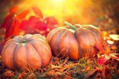 Fondo di giorno di ringraziamento Zucche arancio sopra il fondo della natura Immagini Stock