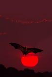 Fondo di Halloween con il pipistrello di volo Fotografia Stock Libera da Diritti