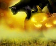 Fondo di Halloween con le zucche ed il gatto Fotografia Stock Libera da Diritti