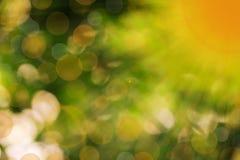 Fondo di illuminazione naturale ha la riflessione del sole e più goccia della luce del sole Immagini Stock Libere da Diritti