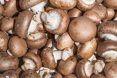 Fondo di intero fungo prataiolo dei funghi Fotografie Stock Libere da Diritti