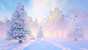 Fondo di inverno con l'albero di abete nevoso Foresta di inverno di mattina fotografia stock