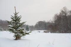 Fondo di inverno dell'albero dell'abete rosso di Snowy Fotografia Stock Libera da Diritti