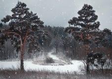 Fondo di inverno di Natale con neve e gli alberi Fotografie Stock