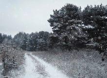 Fondo di inverno di Natale con neve e gli alberi Fotografia Stock