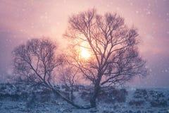 Fondo di inverno di Natale con neve e gli alberi Fotografia Stock Libera da Diritti