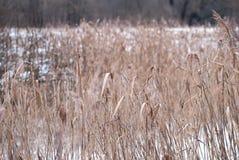 Fondo di inverno di erba gelida al tramonto con lo spazio della copia Fotografie Stock