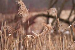 Fondo di inverno di erba gelida al tramonto con lo spazio della copia Fotografia Stock