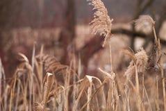Fondo di inverno di erba gelida al tramonto con lo spazio della copia Fotografie Stock Libere da Diritti