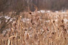Fondo di inverno di erba gelida al tramonto con lo spazio della copia Immagine Stock