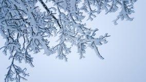 Fondo di inverno: rami di albero congelati dopo il primo piano della tempesta di ghiaccio immagine stock