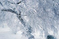 Fondo di inverno: rami di albero congelati dopo la tempesta di ghiaccio fotografia stock