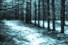 Fondo di inverno, ramo del pino Fotografie Stock Libere da Diritti