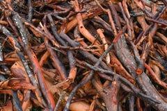Fondo di legno aggrovigliato bagnato della pila fotografia stock libera da diritti