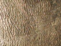 fondo di legno approssimativo marrone di pendenza immagine stock libera da diritti