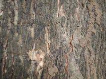 fondo di legno approssimativo marrone di pendenza fotografia stock