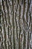 Fondo di legno astratto della corteccia di struttura Fotografie Stock Libere da Diritti