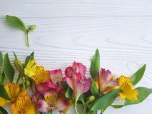 Fondo di legno bianco di disposizione del fiore della decorazione del fiore di Alstroemeria, fragilità della struttura Immagini Stock