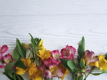 Fondo di legno bianco di disposizione del fiore della decorazione del fiore di Alstroemeria, struttura Fotografia Stock