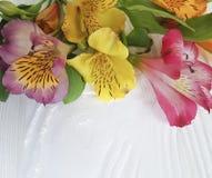 Fondo di legno bianco di disposizione di estate della decorazione del fiore di Alstroemeria, fragilità della struttura Fotografie Stock