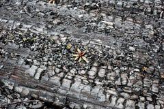 Fondo di legno bruciato-fuori estratto Immagine Stock