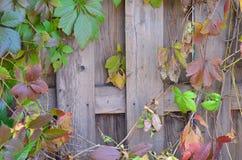 Fondo di legno, colori luminosi Fotografie Stock Libere da Diritti