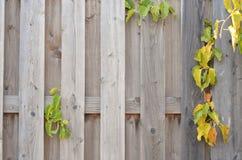 Fondo di legno, colori luminosi Fotografia Stock Libera da Diritti