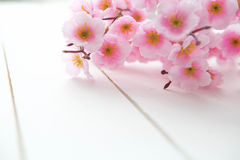 Fondo di legno con i fiori della molla Fotografia Stock Libera da Diritti