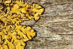Fondo di legno con il lichene Fotografie Stock