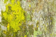 Fondo di legno con il lichene Immagini Stock Libere da Diritti