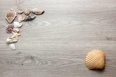 Fondo di legno con le conchiglie Fotografie Stock Libere da Diritti