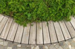 Fondo di legno con le piante Immagine Stock