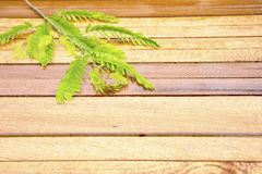 Fondo di legno con permesso del tamarindo Angolo sinistro Fotografie Stock