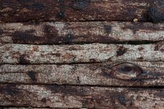 Fondo di legno d'annata reale con la corteccia ed i chiodi fotografia stock