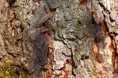 Fondo di legno dai bordi anziani invecchiati entro tempo fotografia stock