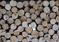 Fondo di legno del ceppo Fotografia Stock Libera da Diritti