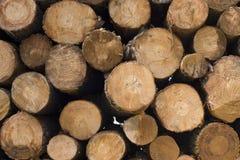 Fondo di legno del mucchio del ceppo per industria del legname fotografia stock libera da diritti